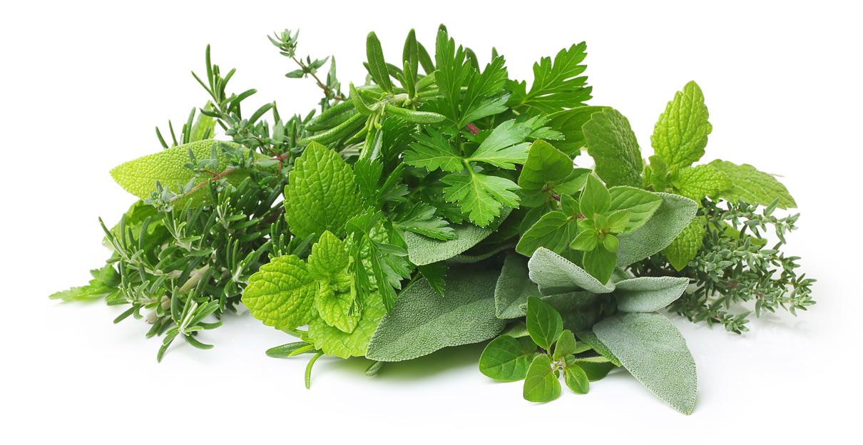 Kräuter / pflanzliche Rohstoffe